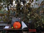 Pumpkin glasses, Brockwell Greenhouse, London